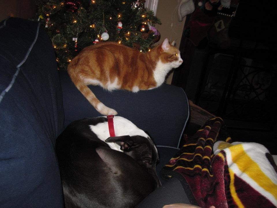 Merry Christmas, Pig and Bellie