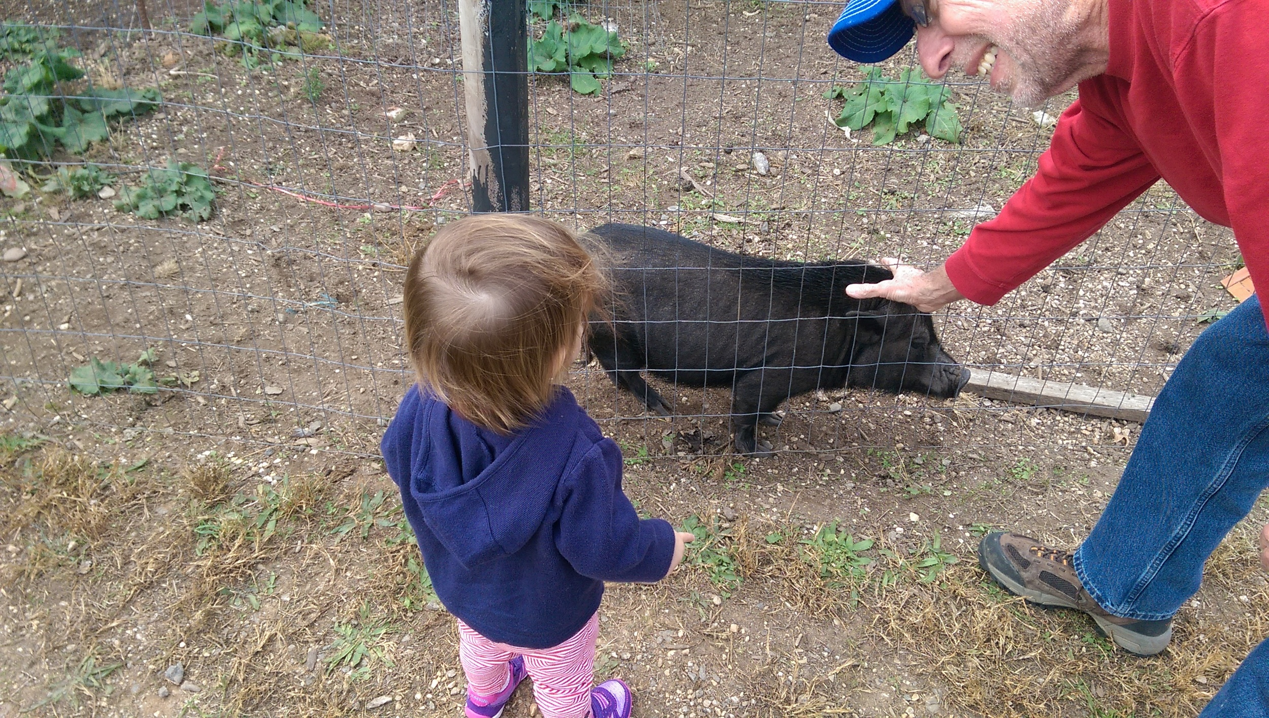 Granddaddy and Cece petting the pig.