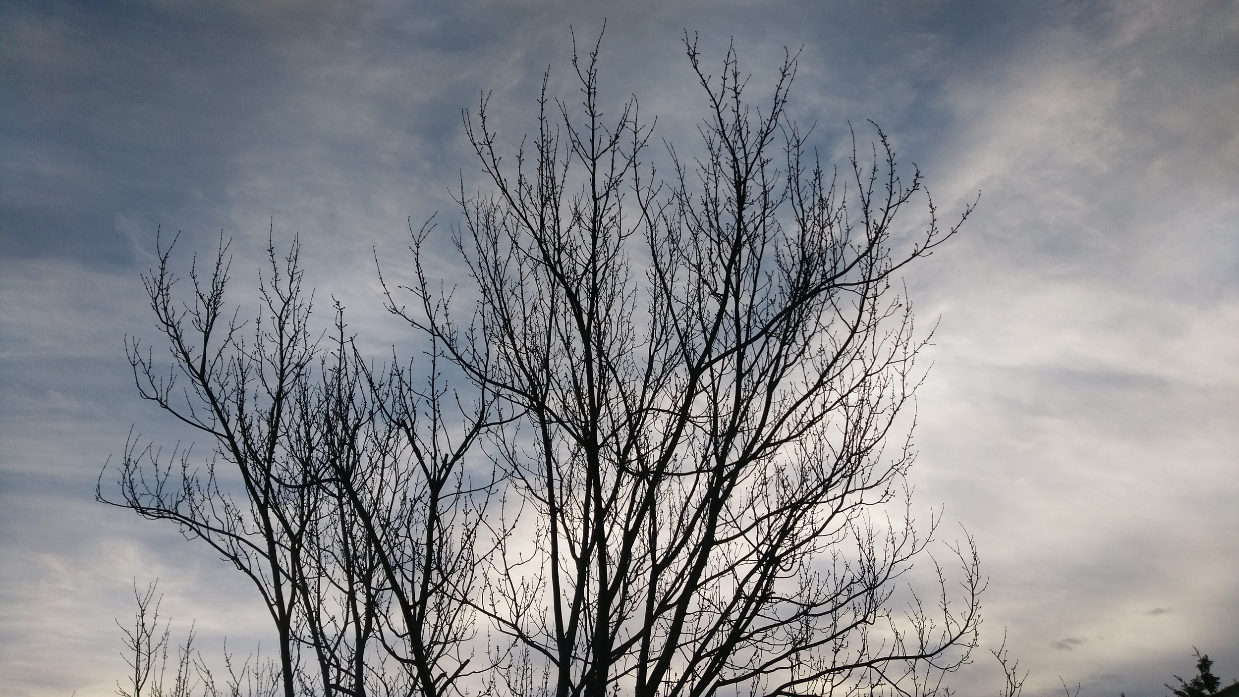 Shot this morning from the kitchen. I liked how the sky looked through the tree in the backyard.