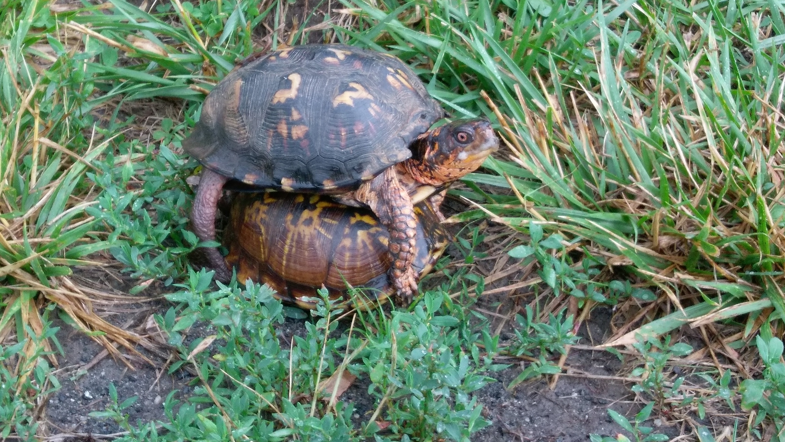 Turtles find thunderstorms exciting.