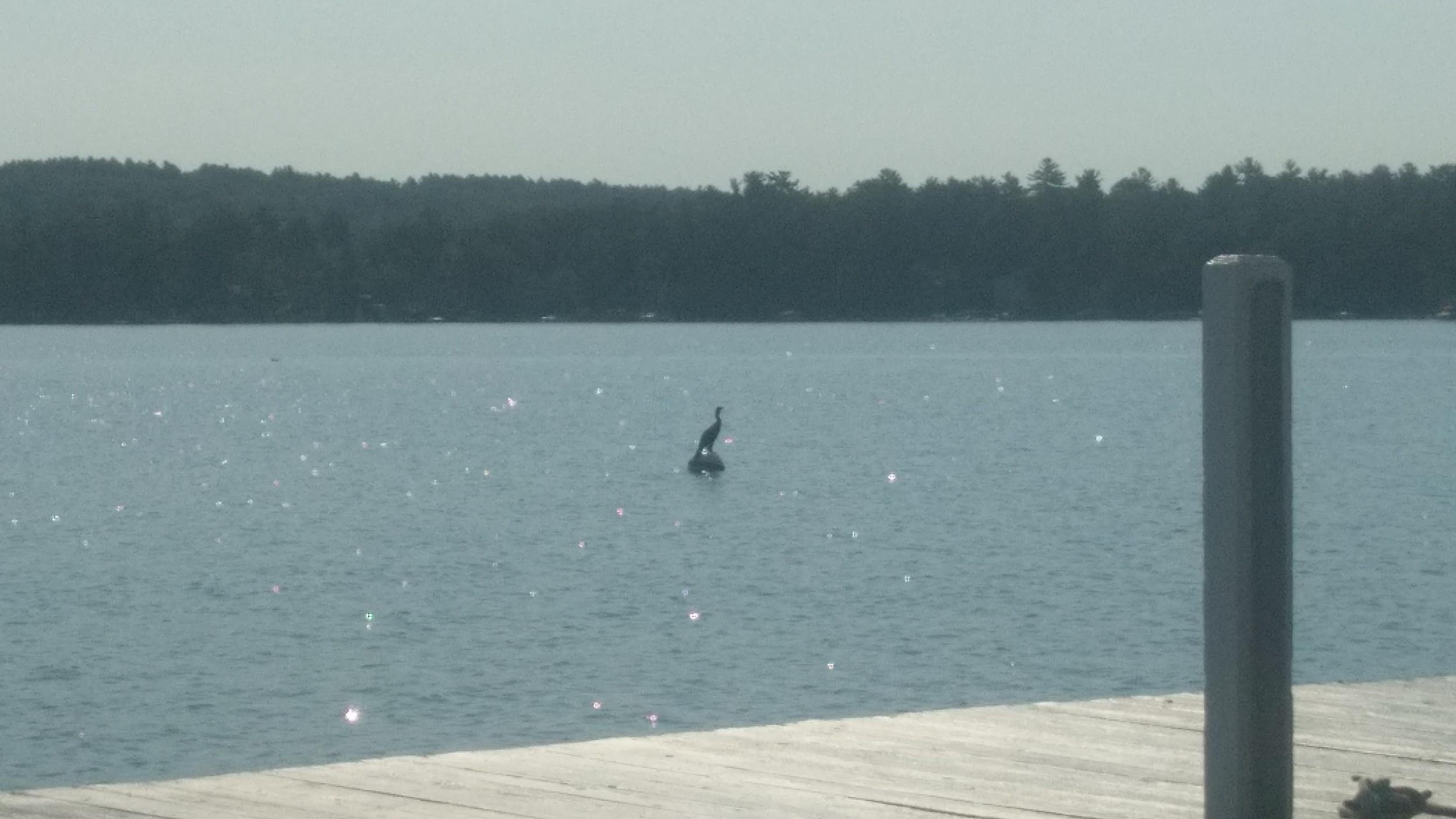 Crane on a buoy