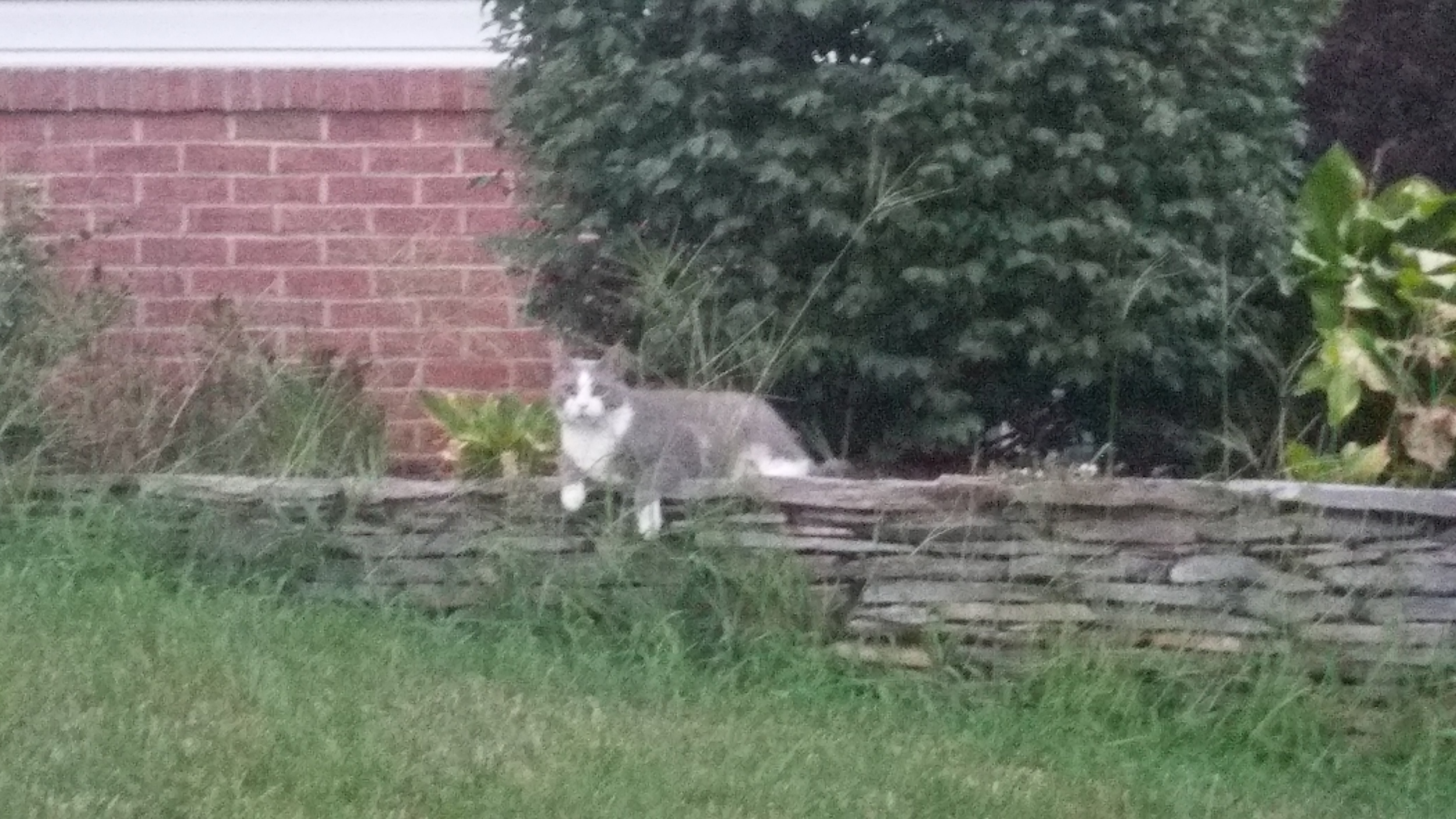 This guy was watching me run on Saturday. Thanks for keeping me in line, Cat.