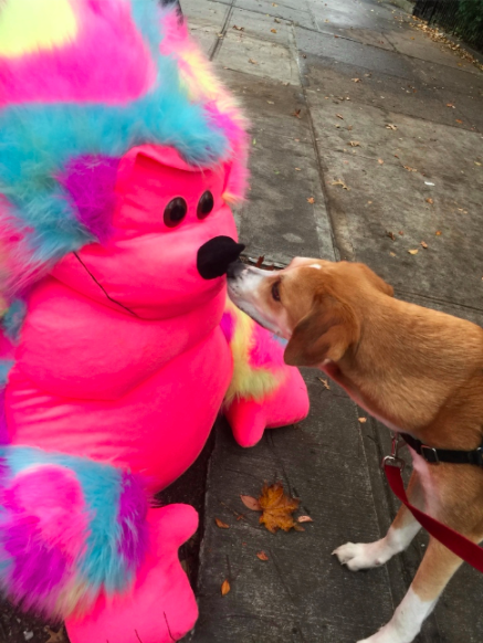 Our awesome Park Slope dog walker Molly took this picture of Dag.