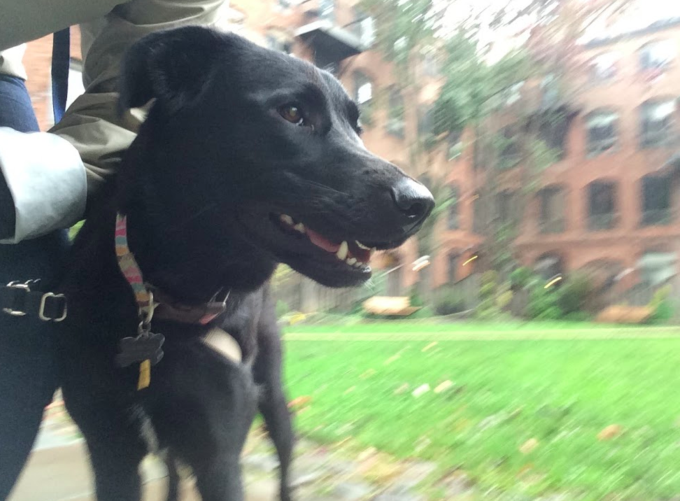 Our awesome Park Slope dog walker Grace took this picture.