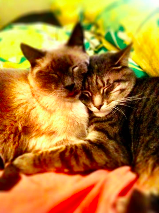 One of our awesome Gowanus cat sitters took this picture of Julian and Hearts.