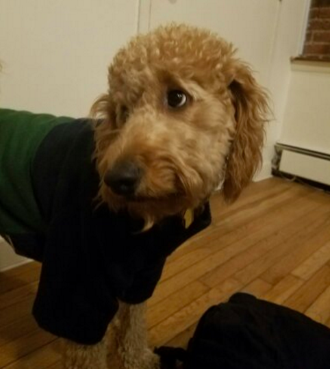 Ollie's picture taken by our awesome Park Slope dog walker Liz.
