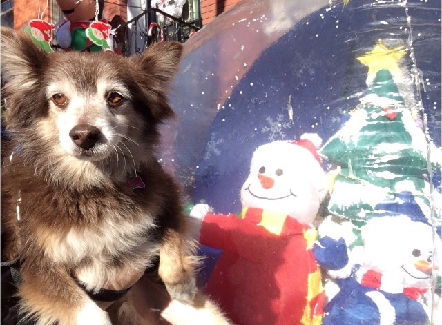 Photo by our Carroll Gardens dog walker