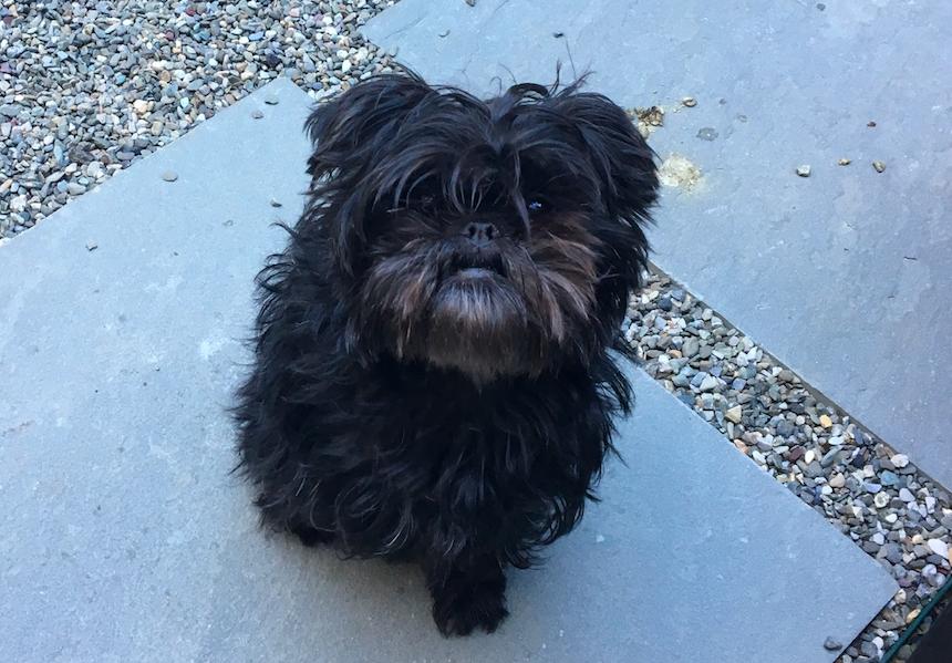Photo by our Park Slope dog walker Grace