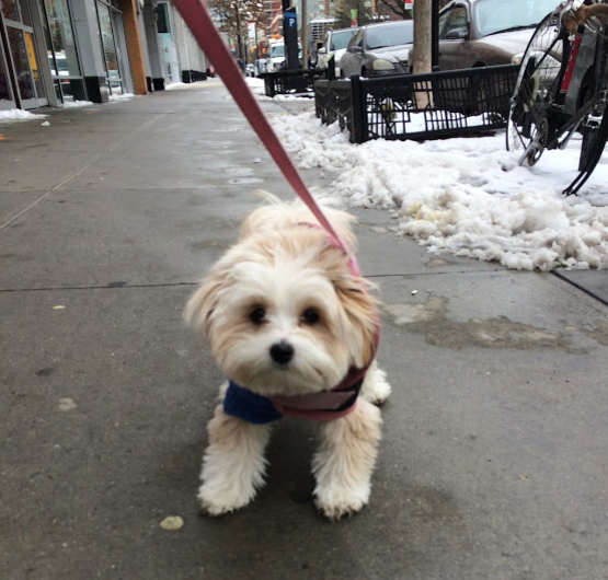 Photo of Nala by our Fort Greene dog walker Molly