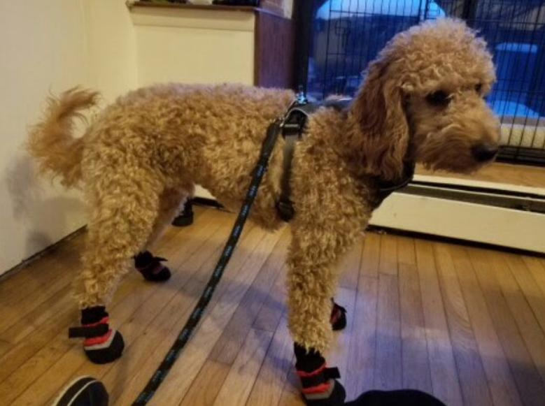Photo of Ollie by our Park Slope Dog walker Liz