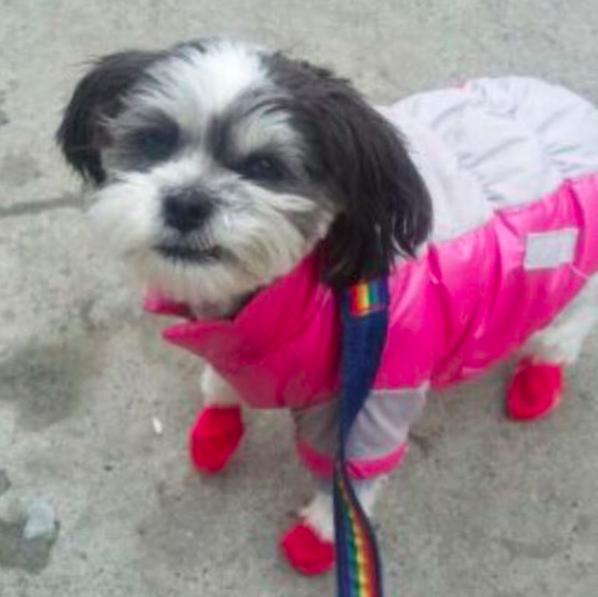 Photo of Sundae by our Windsor Terrace dog walker Trudi