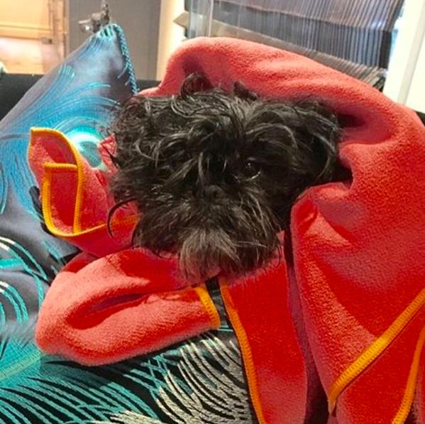 Photo of Greta by our Park Slope dog walker Grace