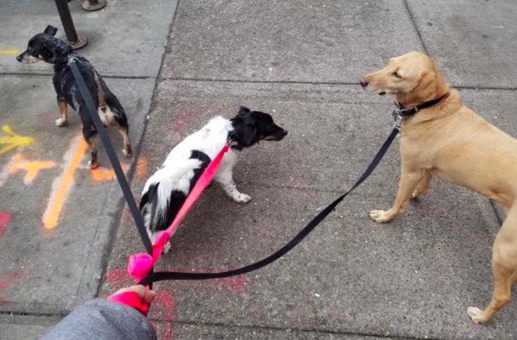 Photo by our Park Slope dog walker Ben
