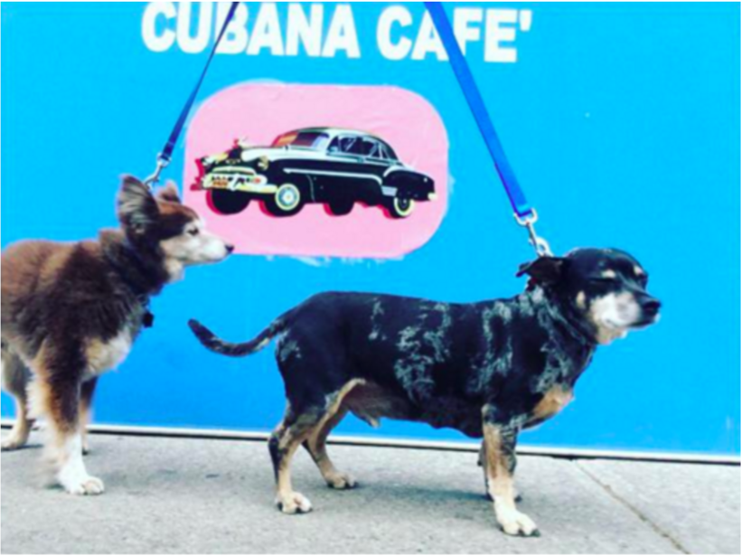 Photo by Park Slope dog walker