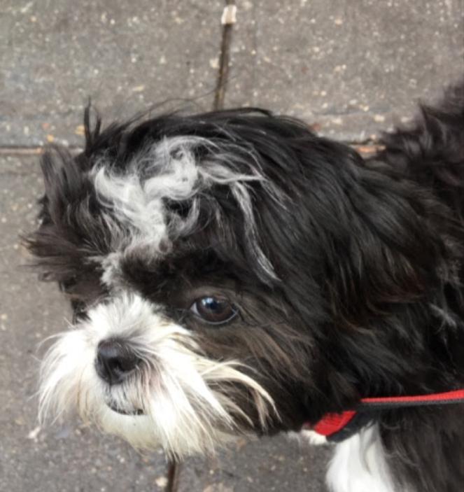 Photo of Luna by our Park Slope dog walker Grace