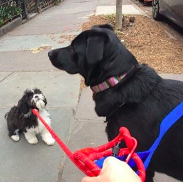 Photo by our Park Slope dog walker