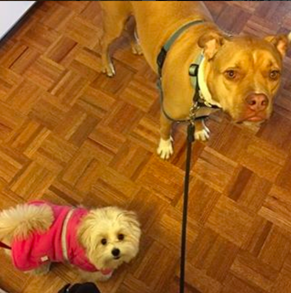 Photo by our Downtown Brooklyn dog walker Molly
