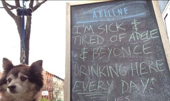 Photo of Matie by our Carroll Gardens dog walker
