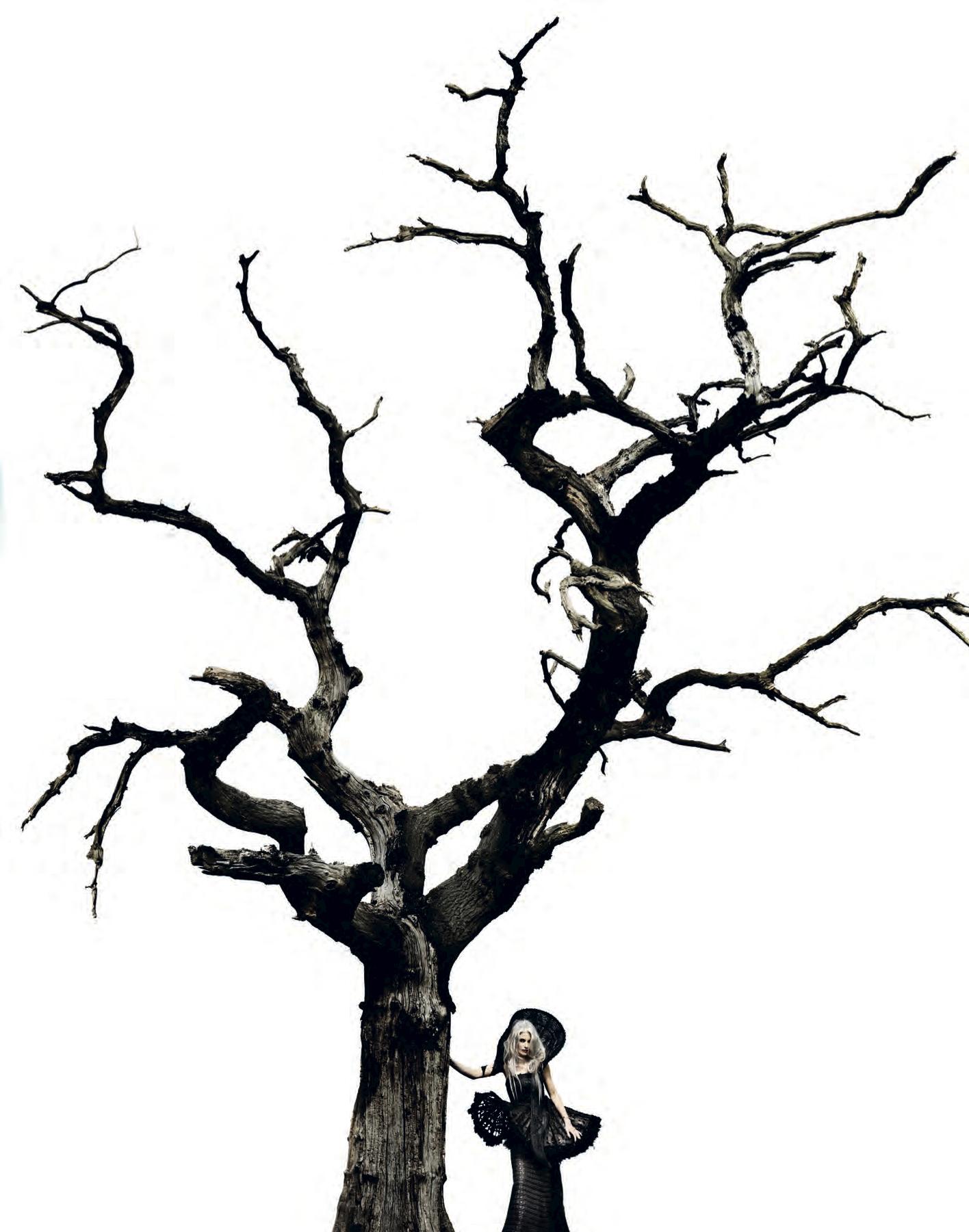 edicttree.jpg