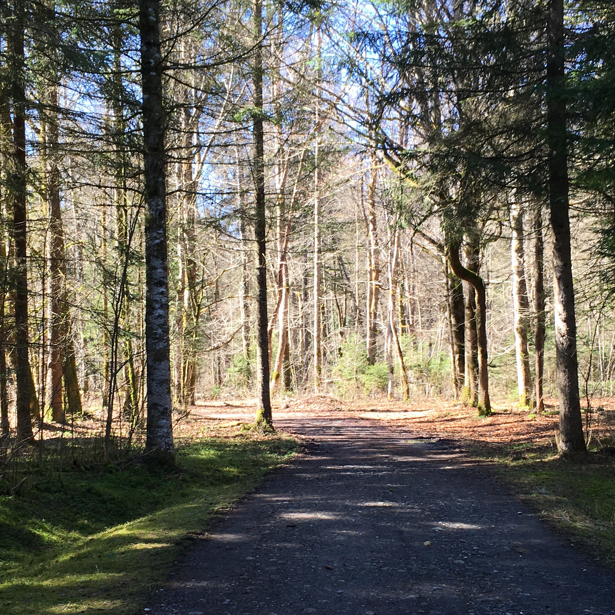 L'Etelley forest:a gentle walk along the valley floor.