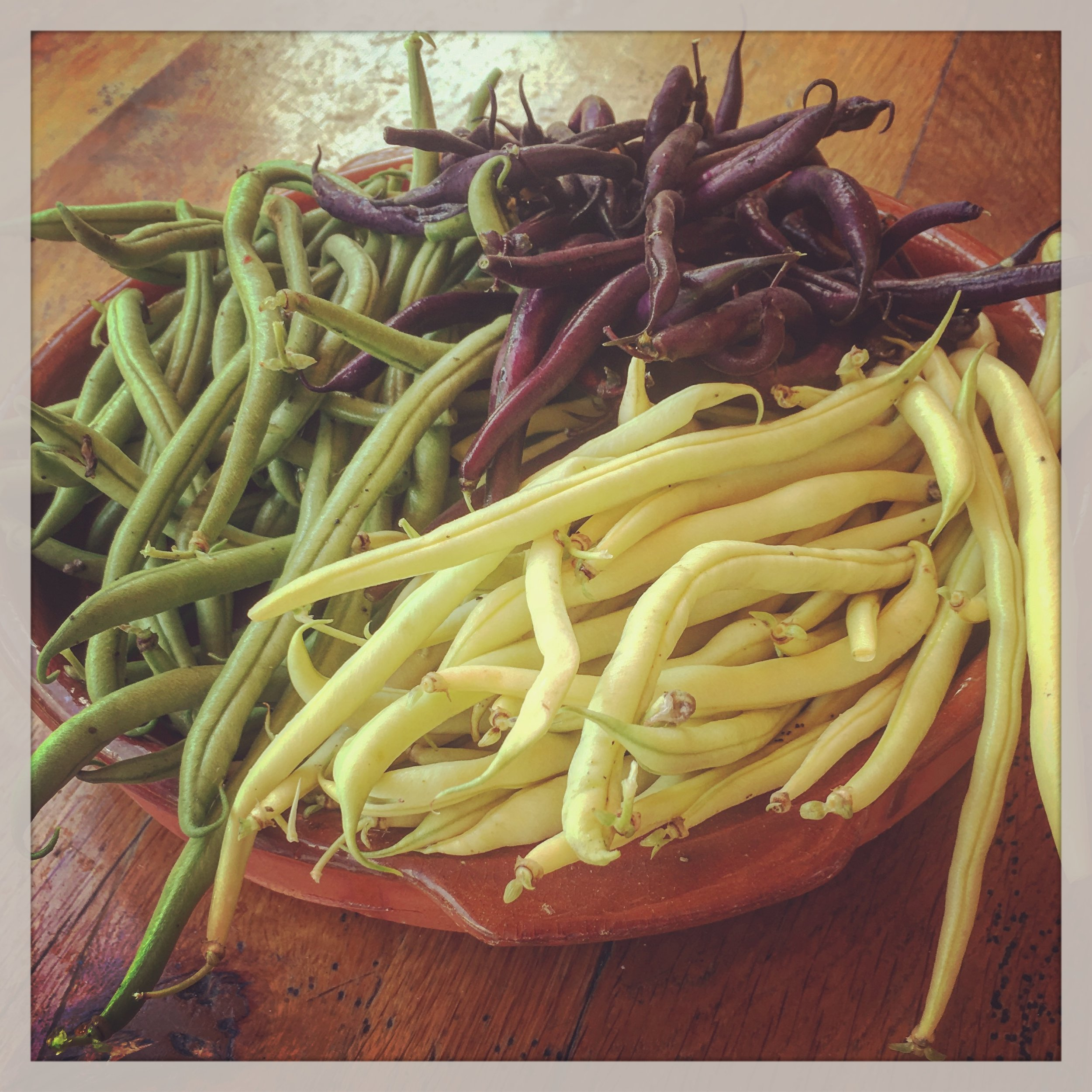 Italian beans, grown in France...