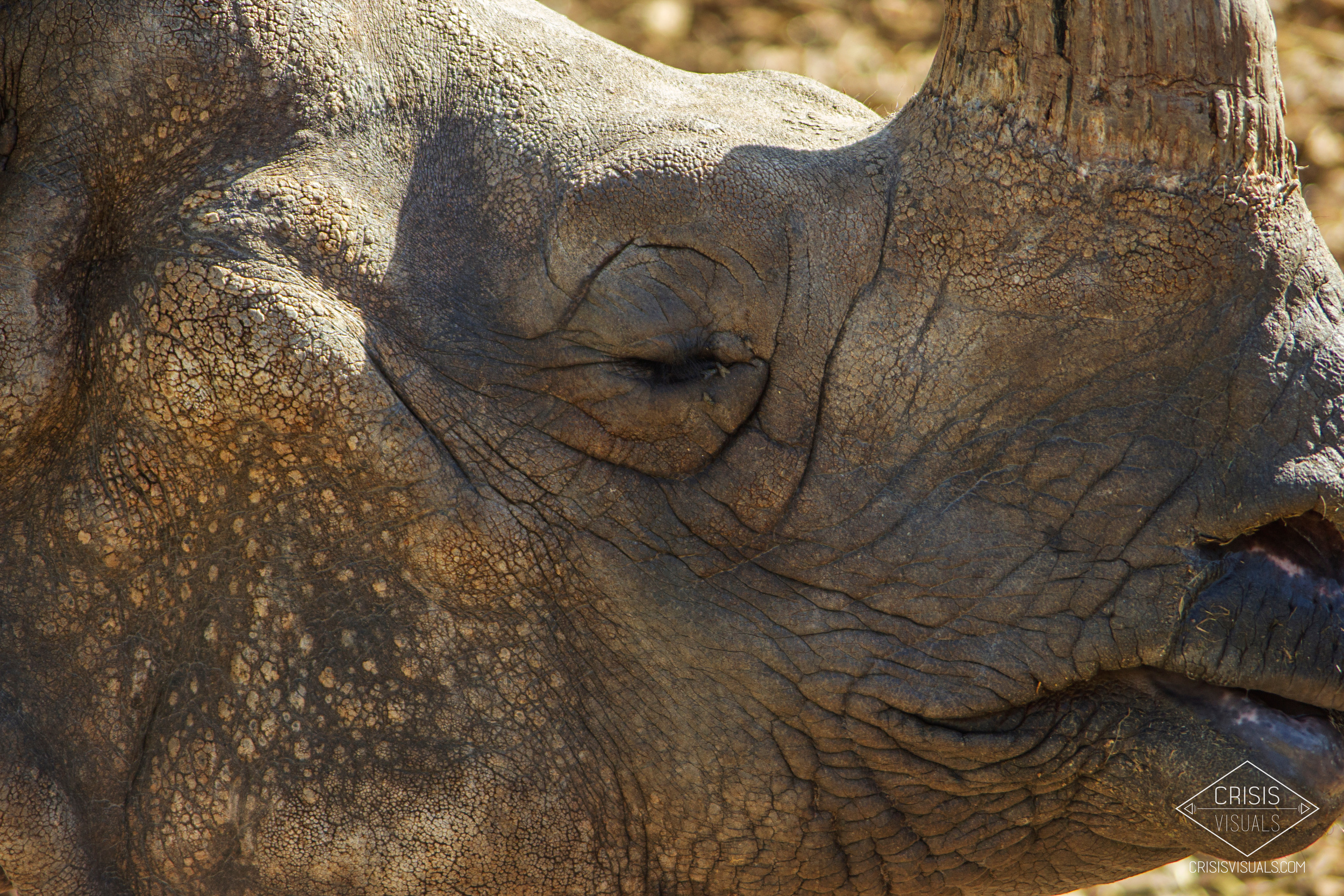 Rhino's Profile