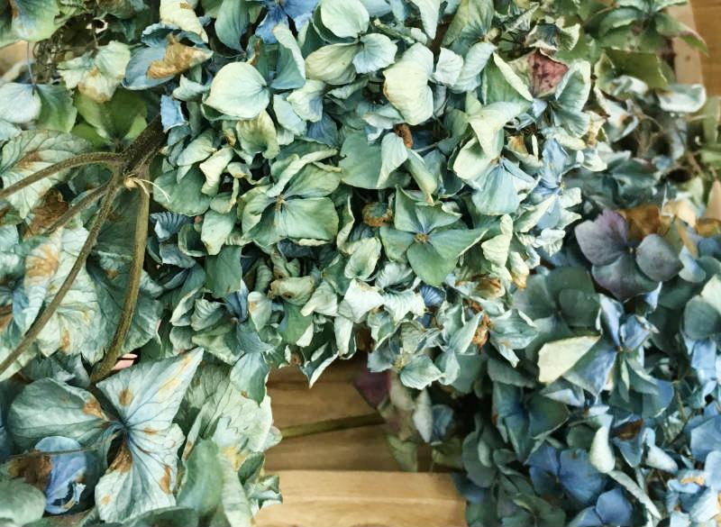 Dried Antique Hydrangeas.jpg
