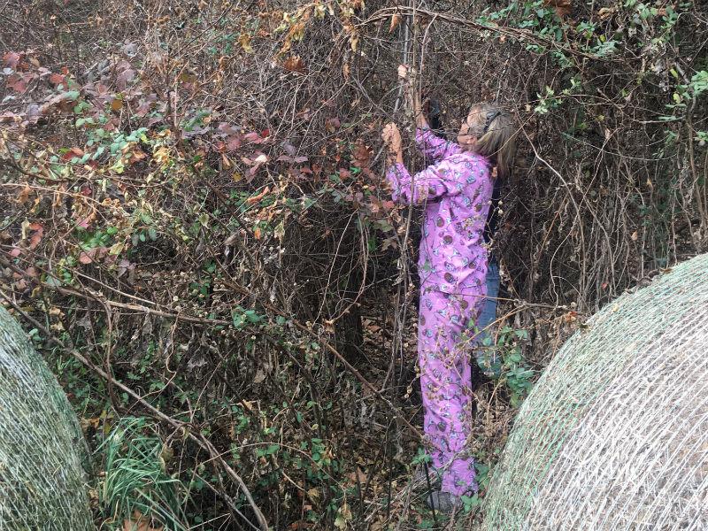 foraging aunt in pjs.jpg