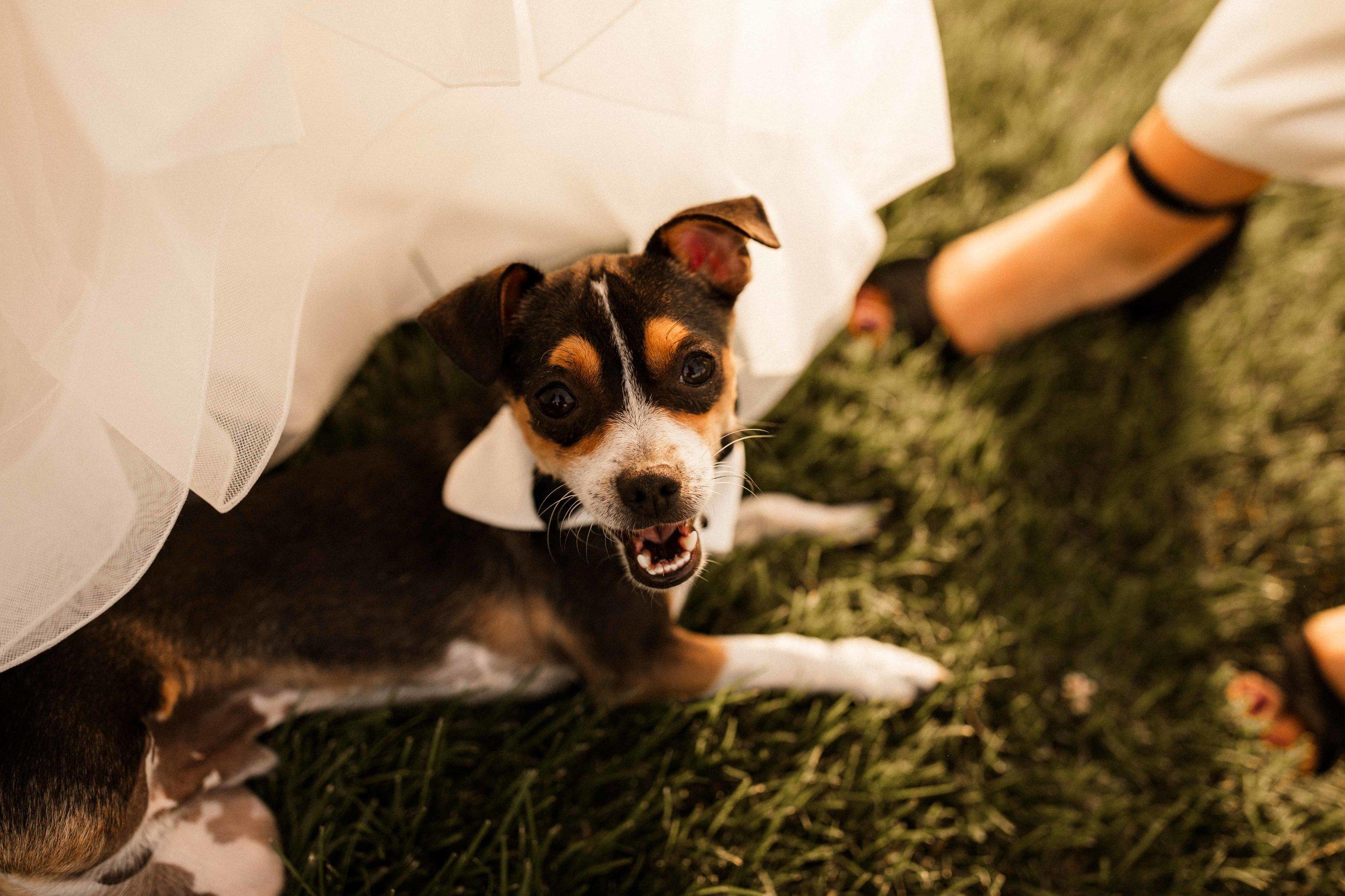 pasco-wedding-photos-27.jpg