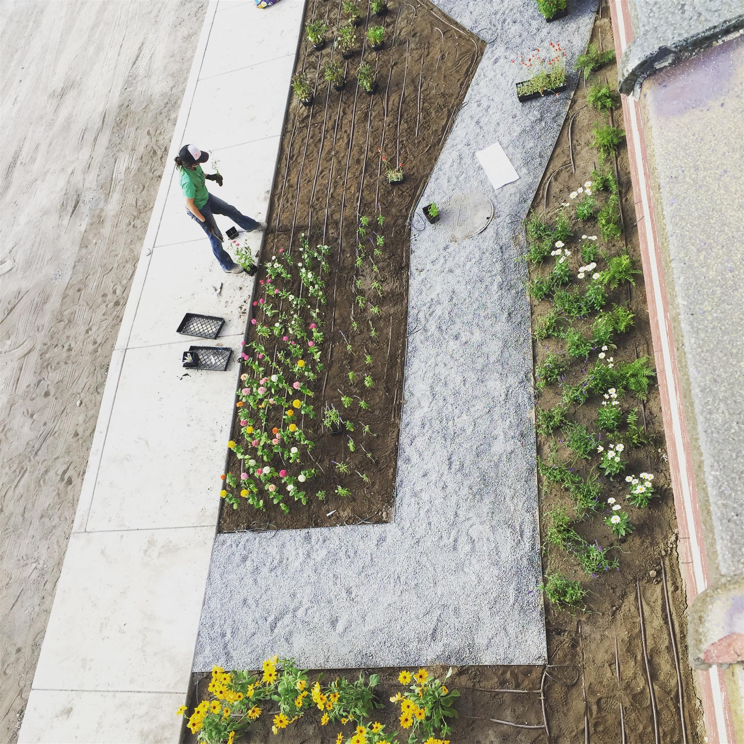 Parallel Lines_Table X Flower Garden