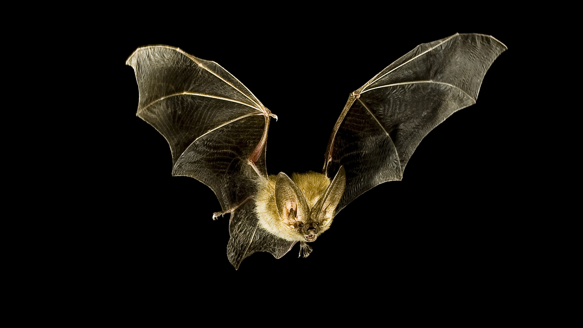 bat-inline.jpg