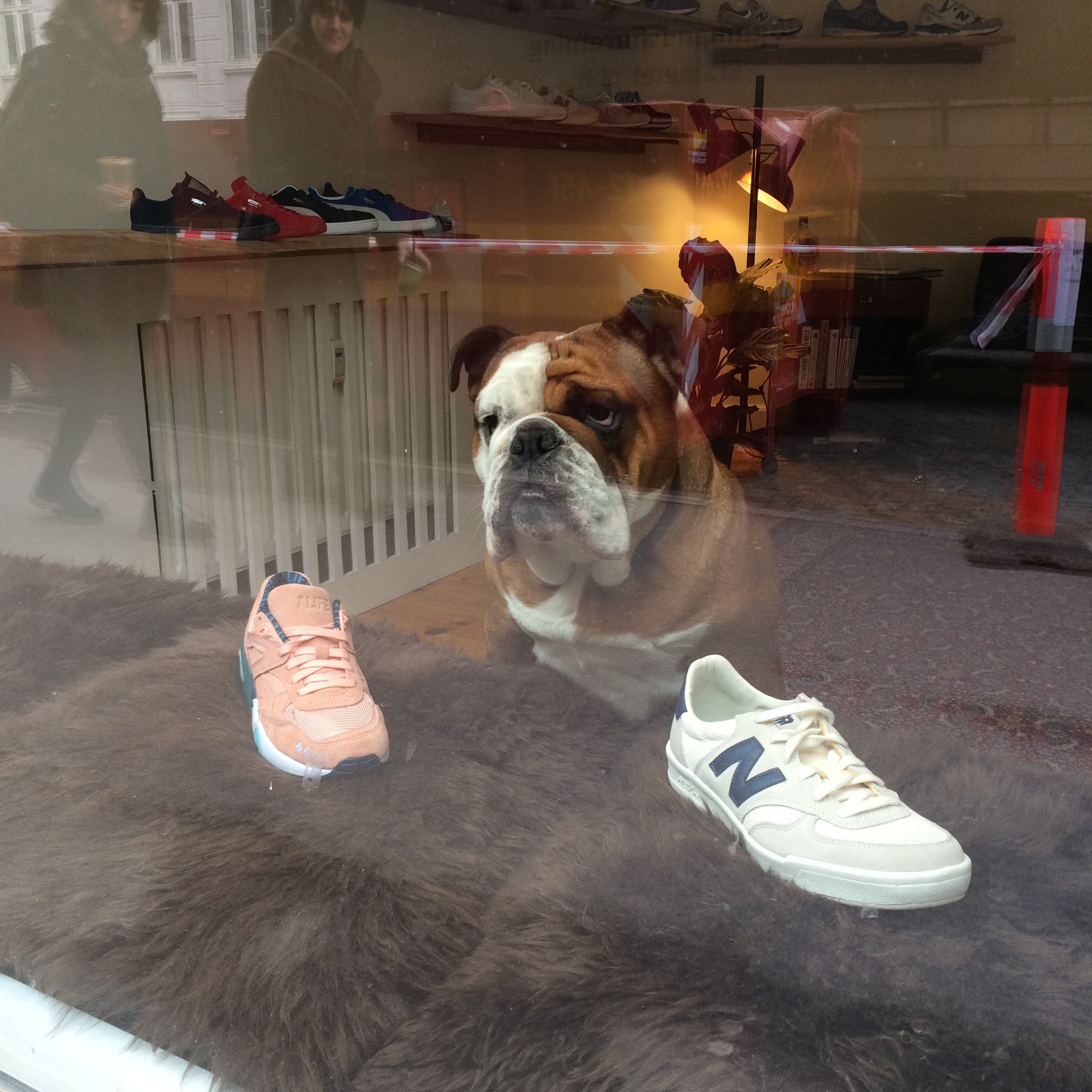 Cute dogs who worked in a cool Sneakers and Coffee shop.