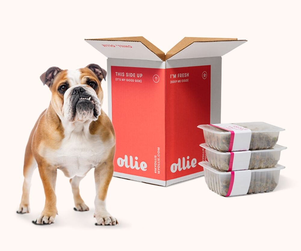 Get your dog excited about meal time. Click the image to sign up for Ollie: real, human grade food tailored for your pups' needs! For everyone who signs up, Ollie will donate $50 dollars to us!