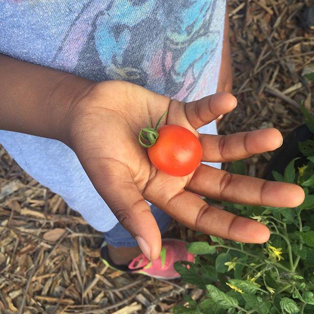 Cherry tomato time!
