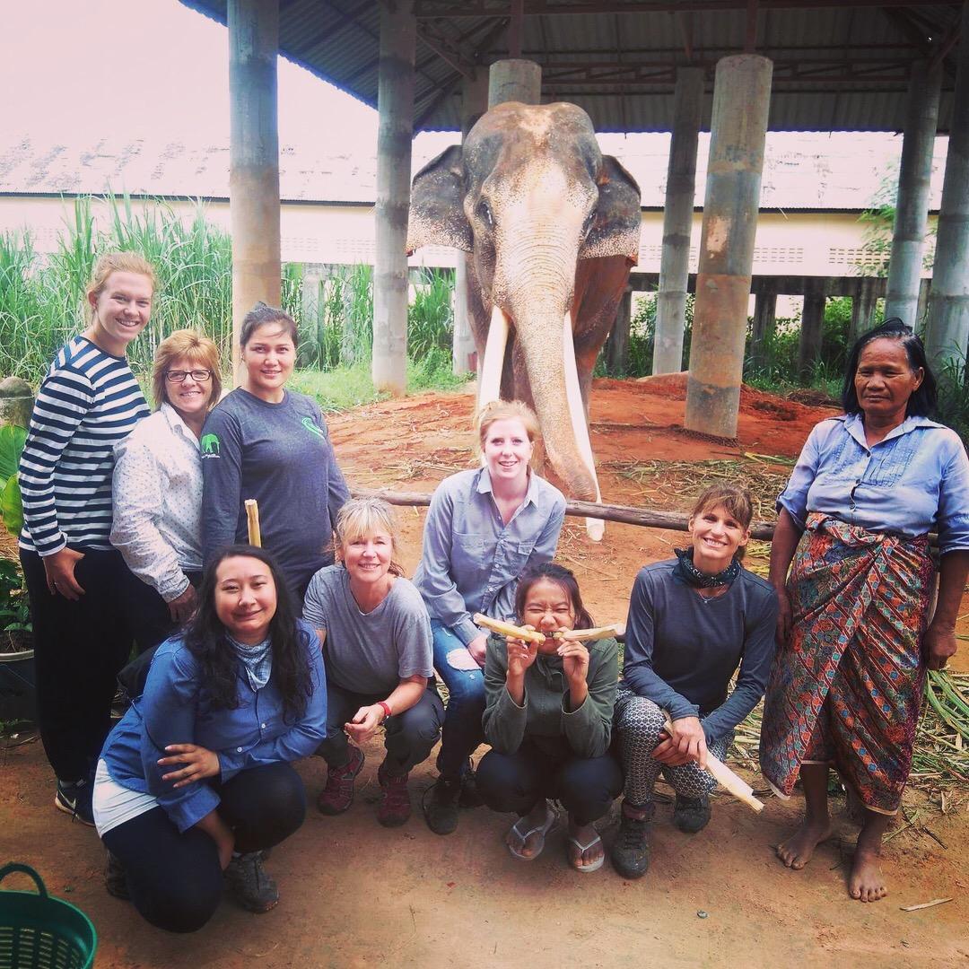 elephant thailand.JPG