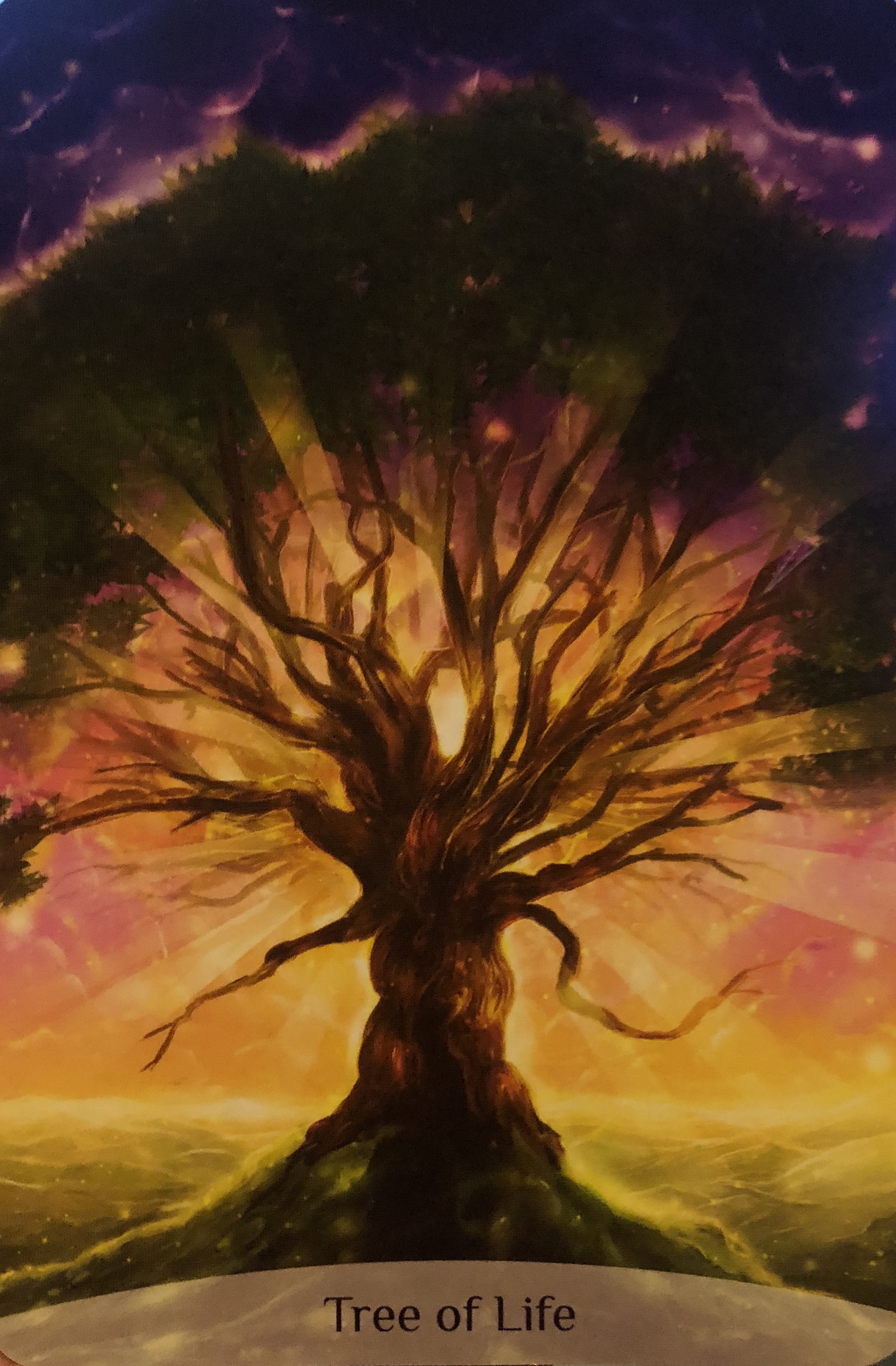 Sacred Power Reading Cards Tree of Life