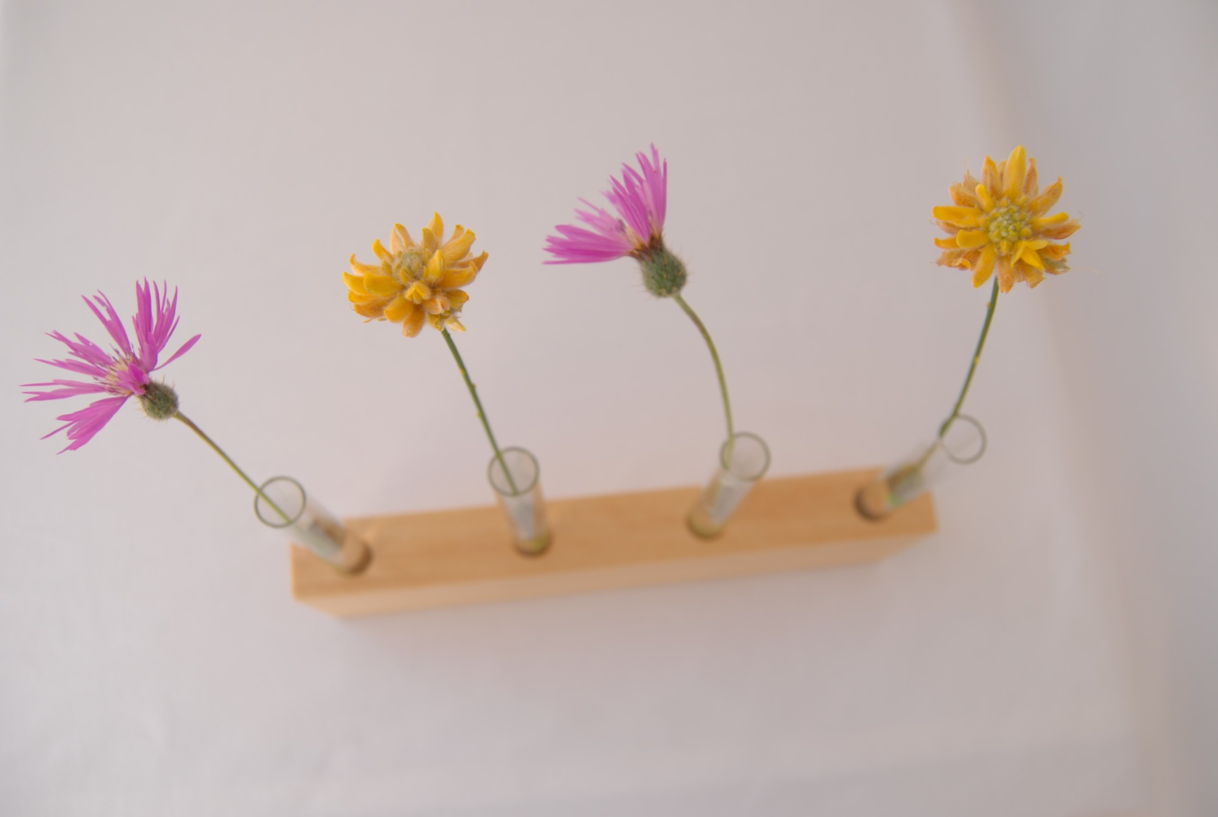 Flower display vase with test tubes and wild flowers /  Expositor de flores en madera de samba con tubos de ensayo.