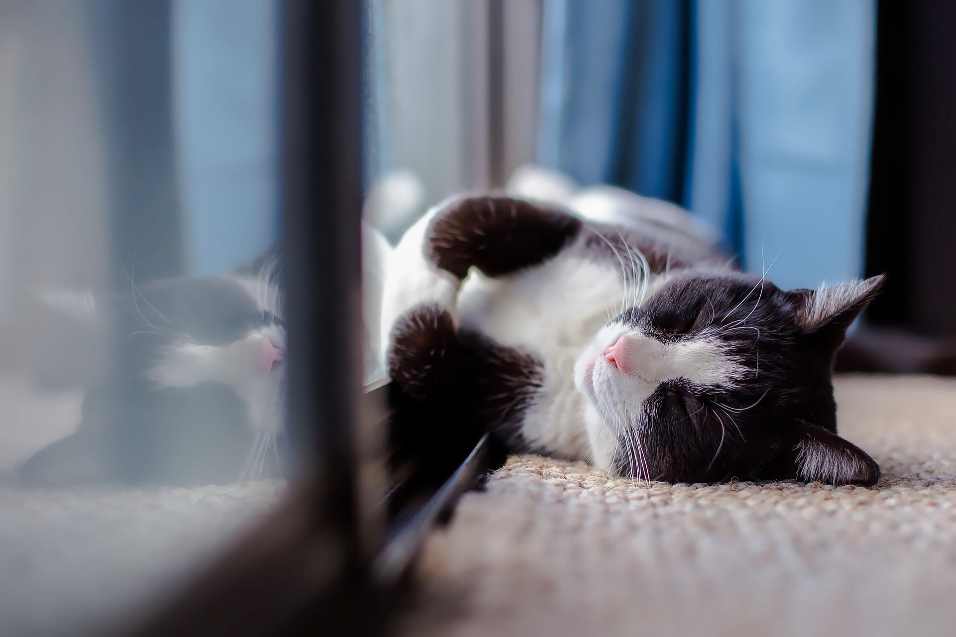 cat-1903024_1920.jpg