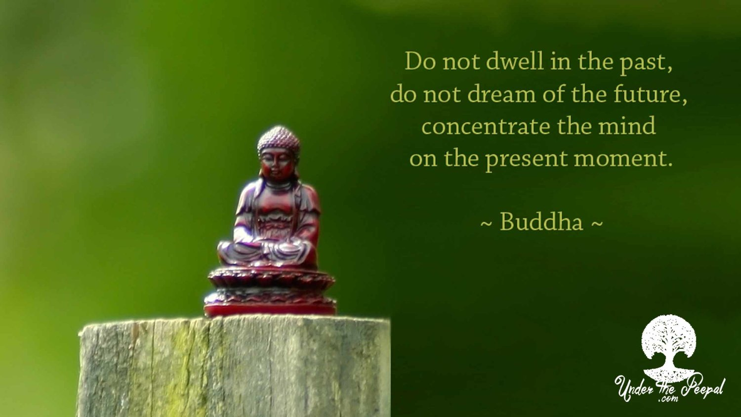 Do not dwell in the past, do not dream of the future, concentrate the mind on the present moment- Buddha Quote