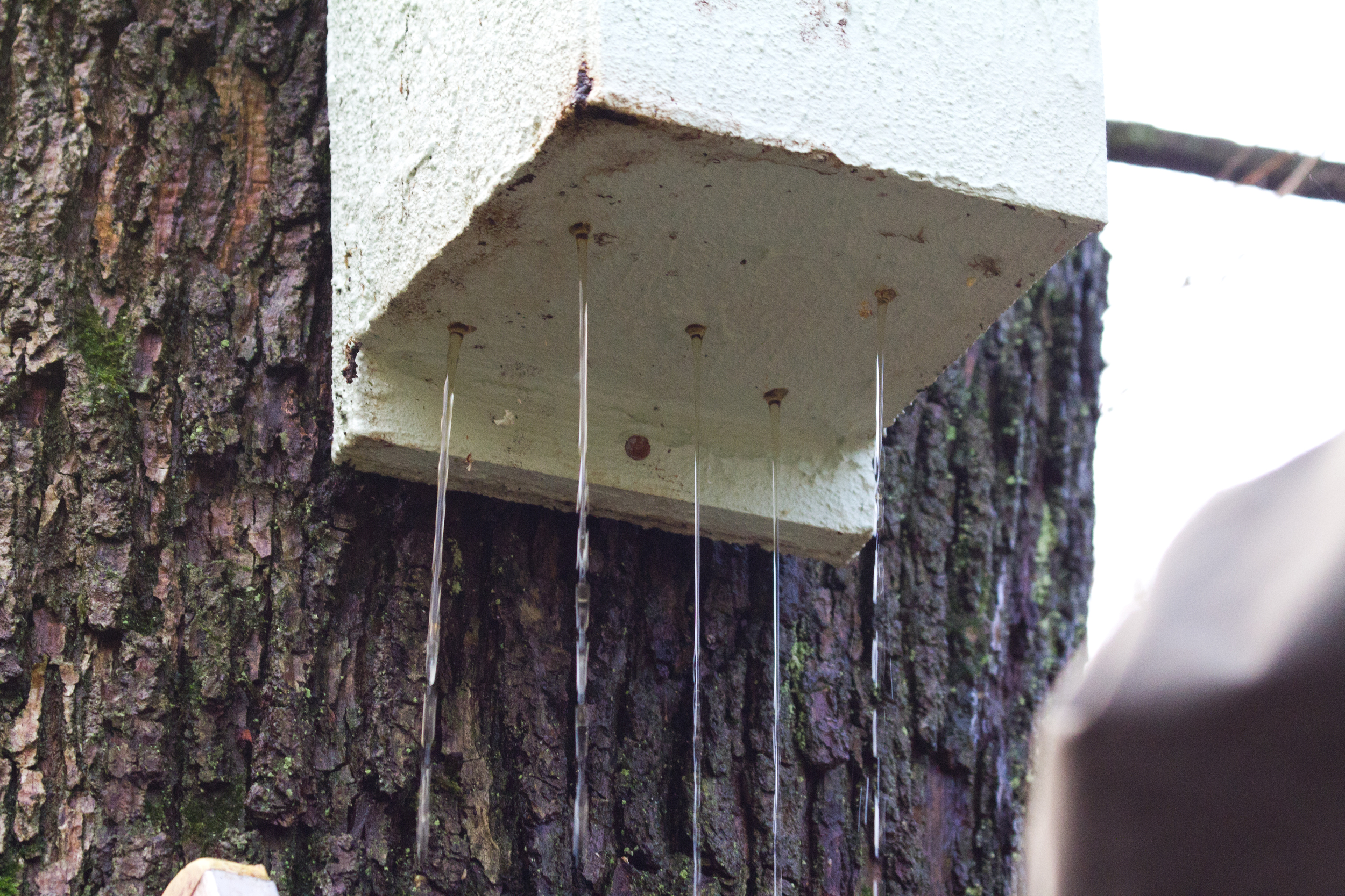 Rain damage nestbox.jpg