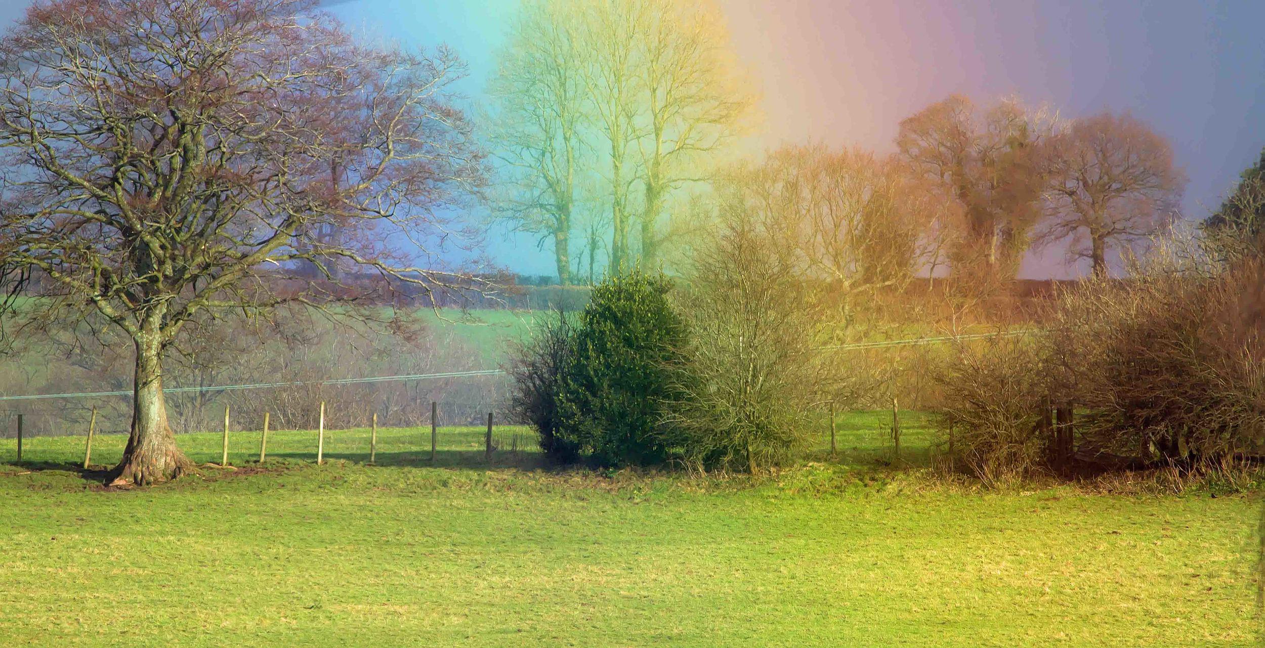 Rainbow in field 16th Jan.jpg