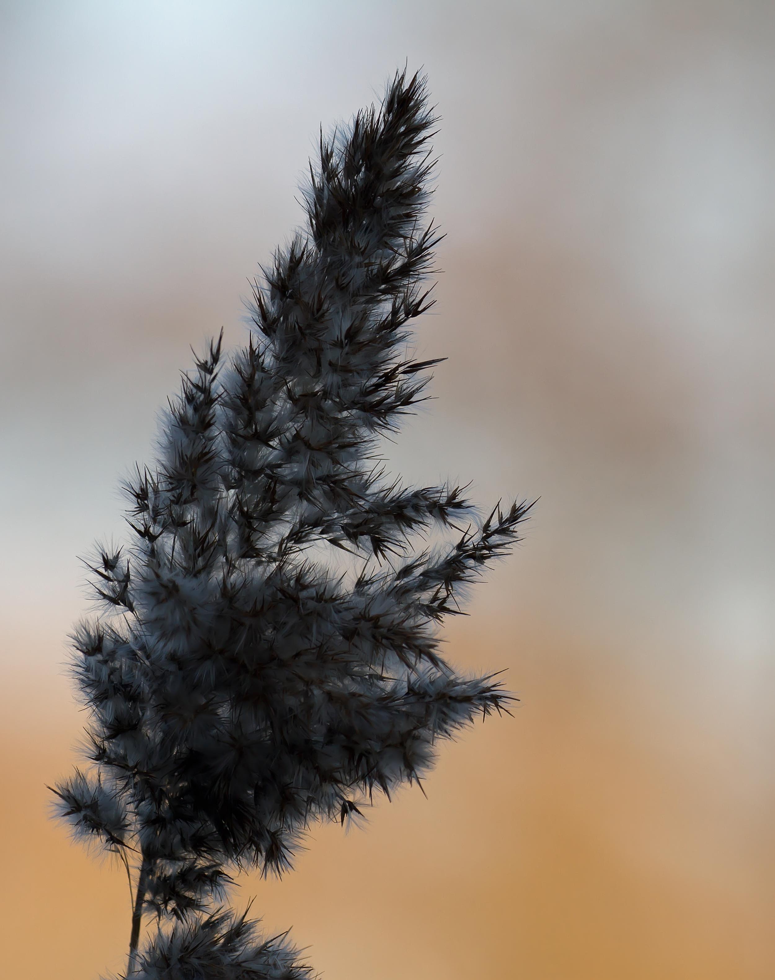 Reeds 8th Feb.jpg