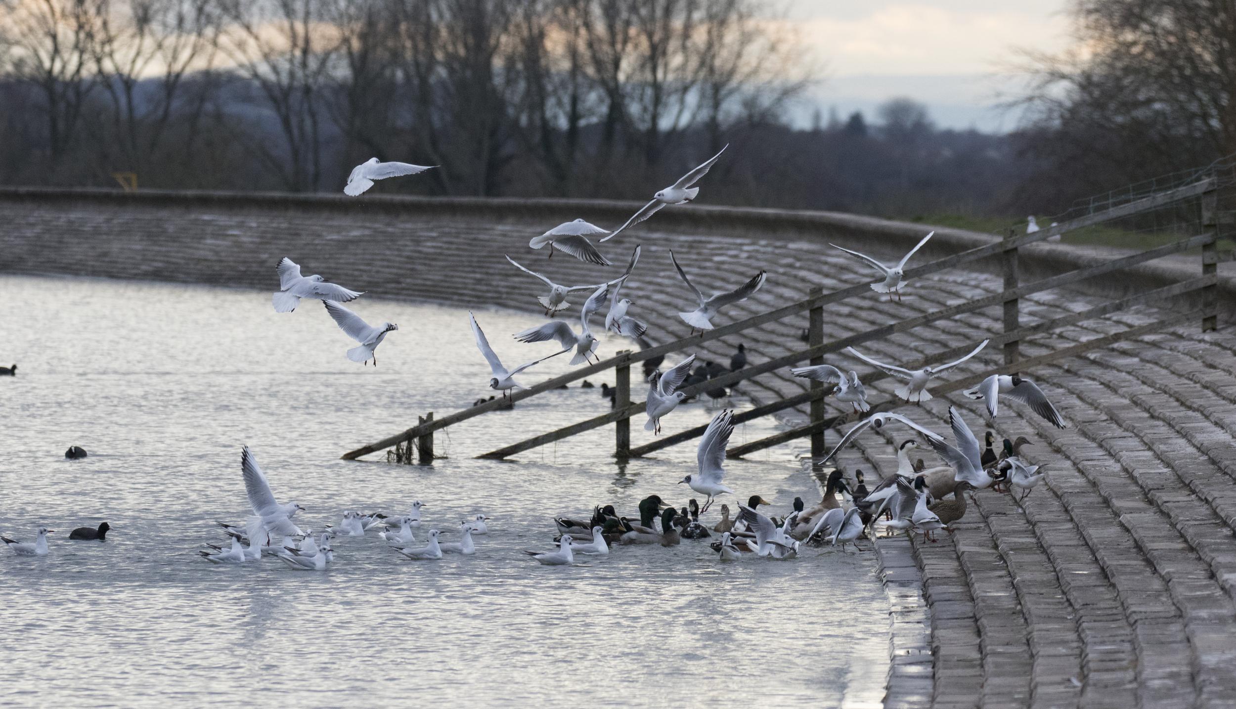 Cheddar Res Feeding Birds.jpg