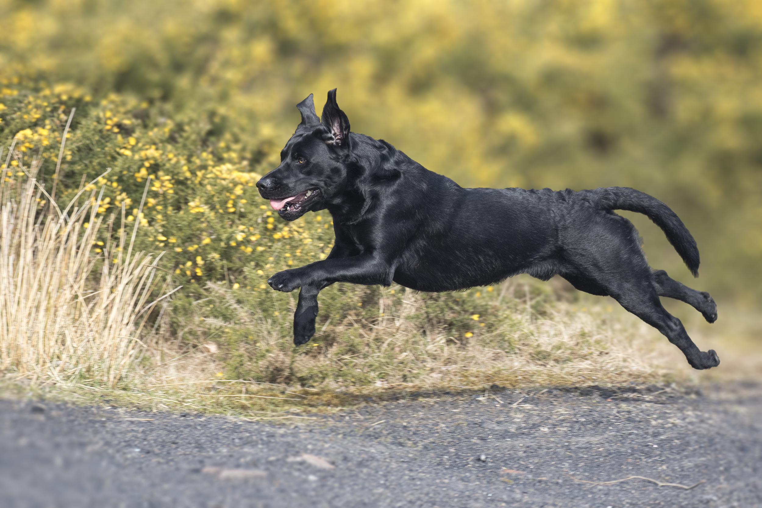 Alfie Running 19th March.jpg