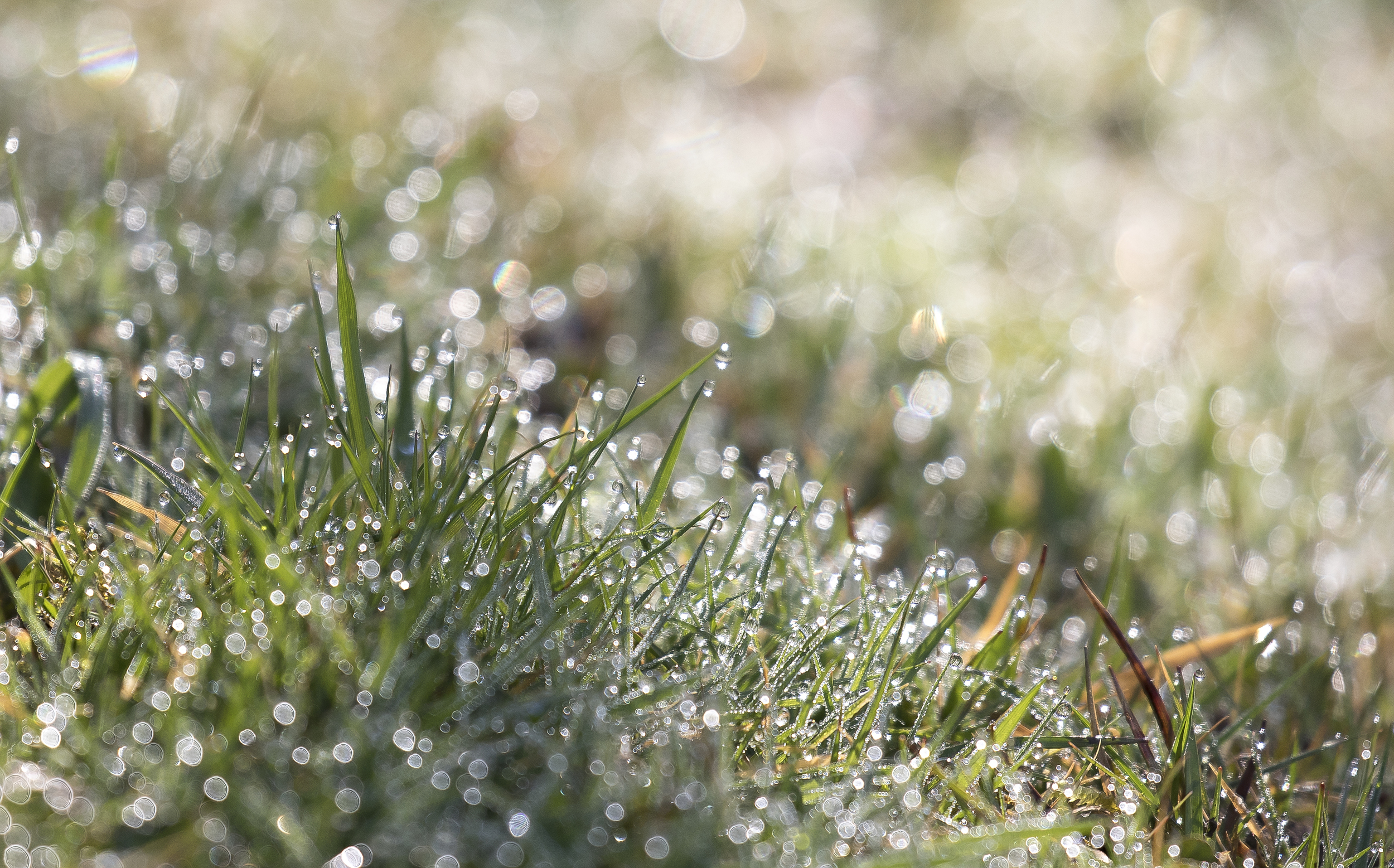 Grass Dew 20th March.jpg