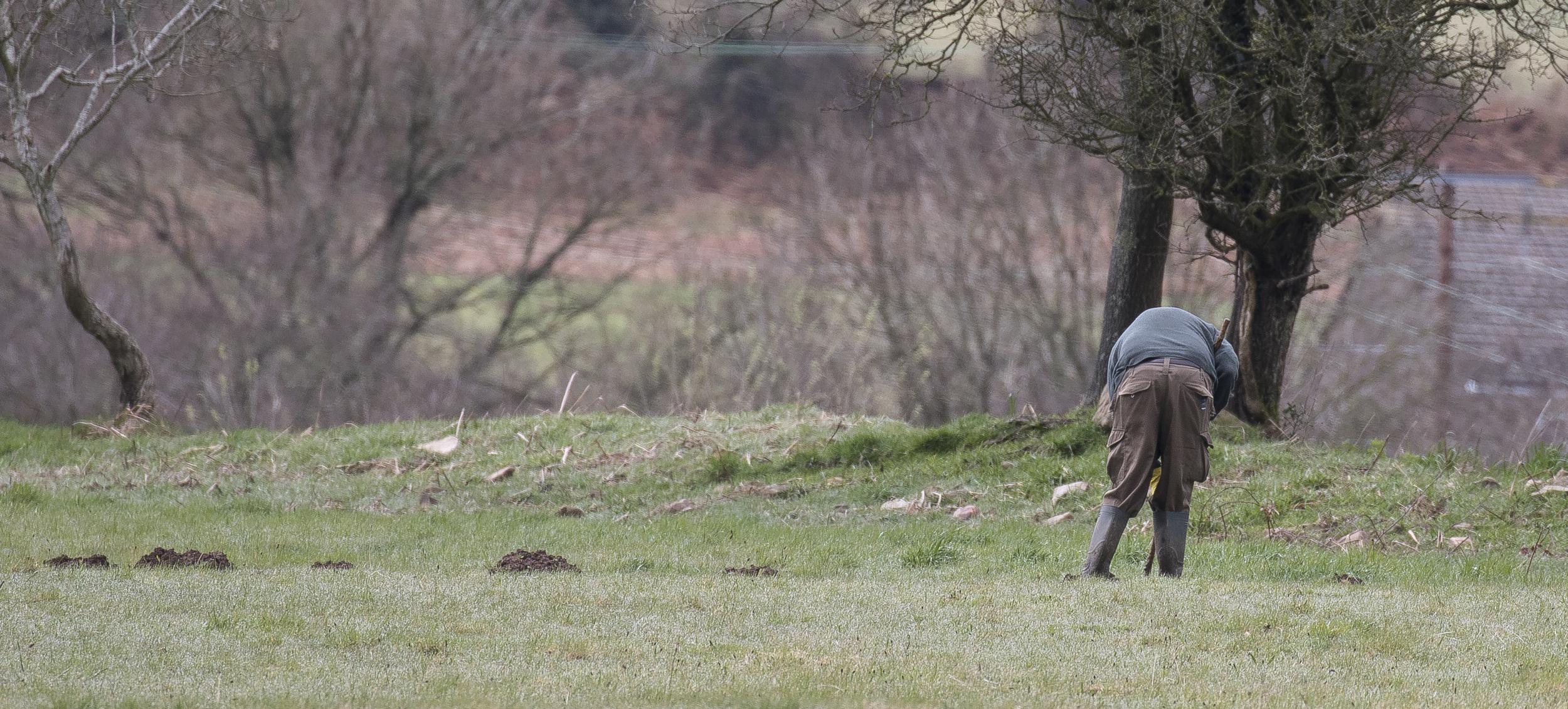 Farmer Poisening Moles 3rd April.jpg
