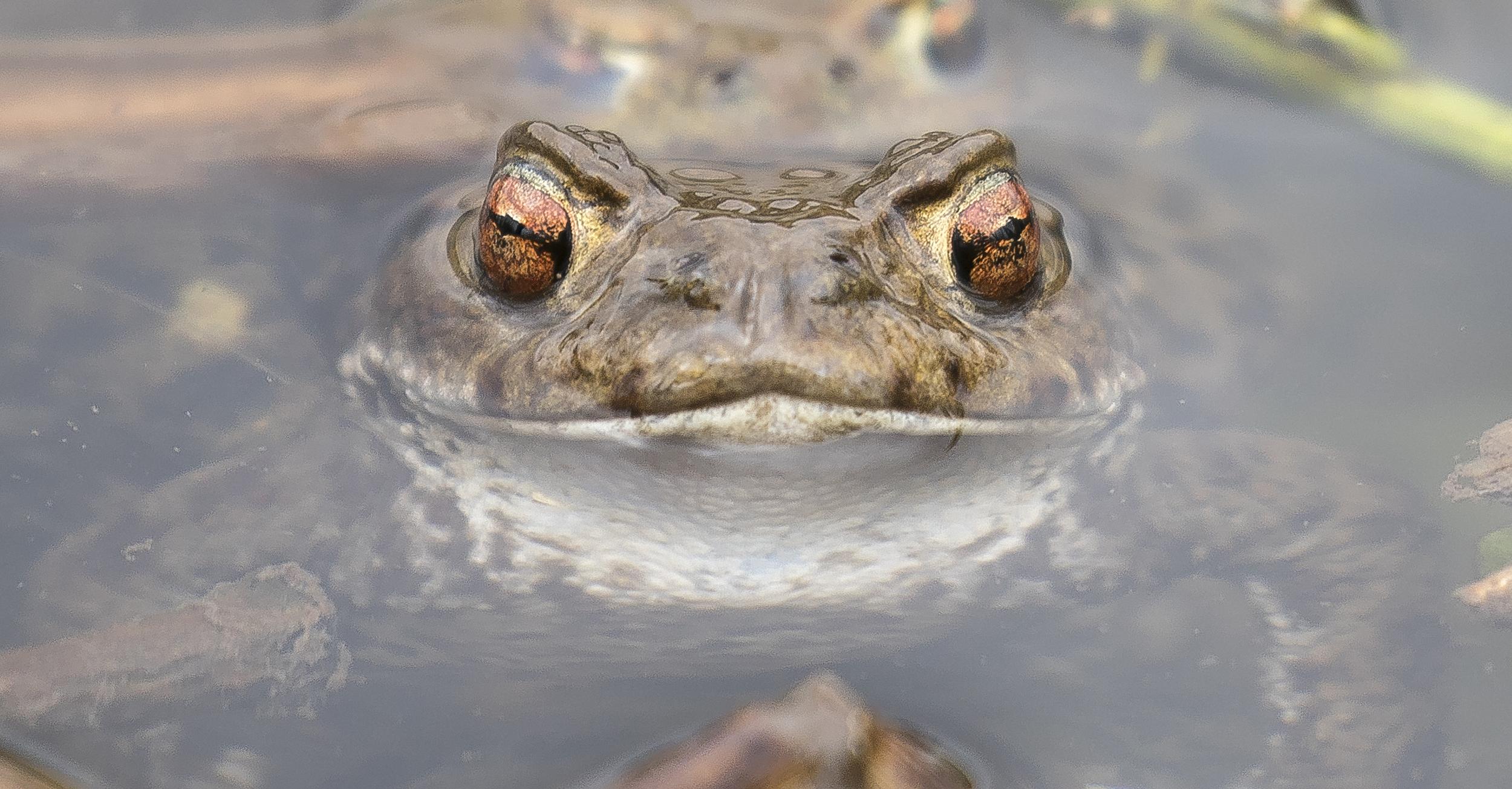 Toad Face 3rd April.jpg