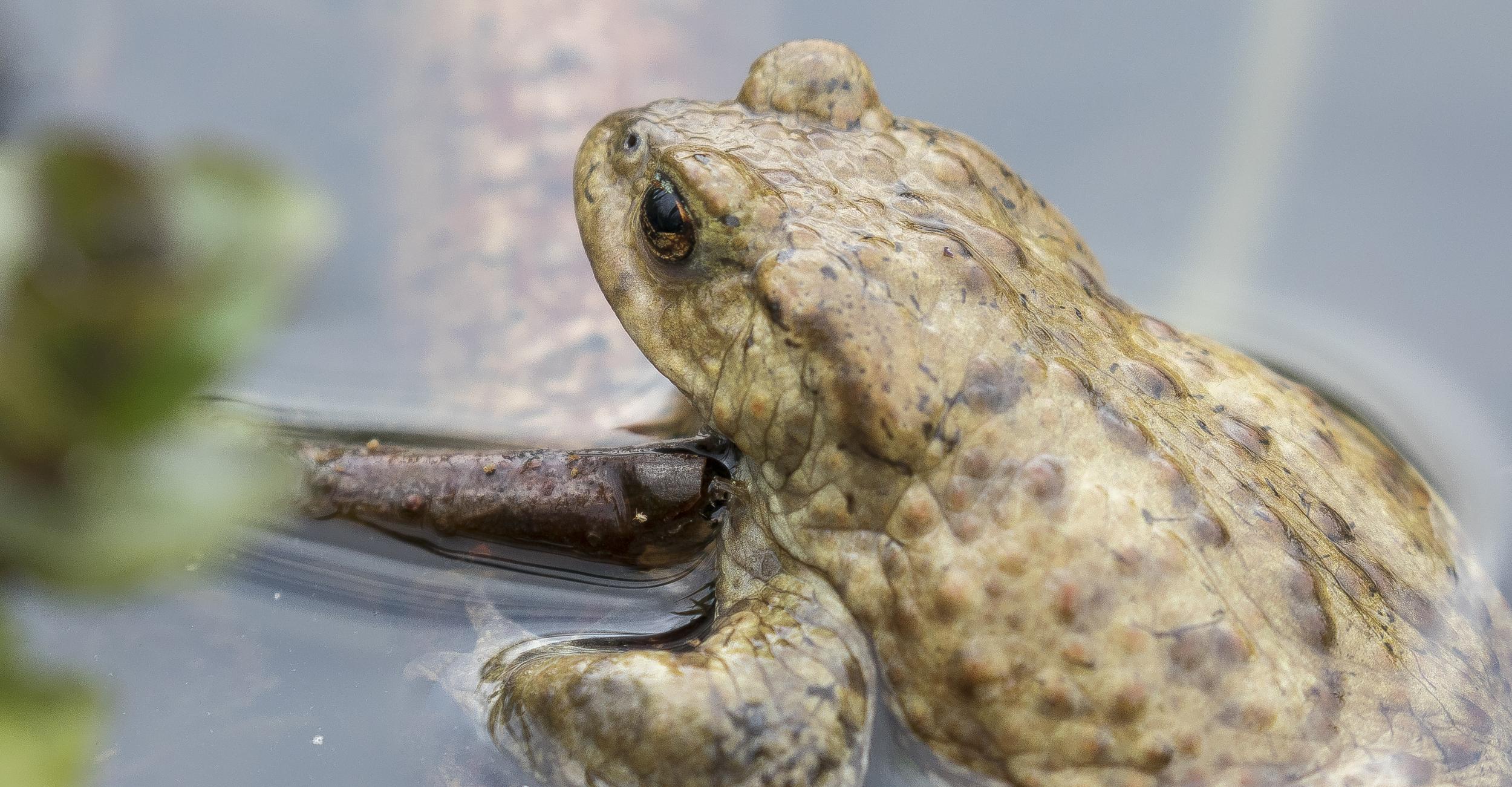 Toad back 3rd April.jpg