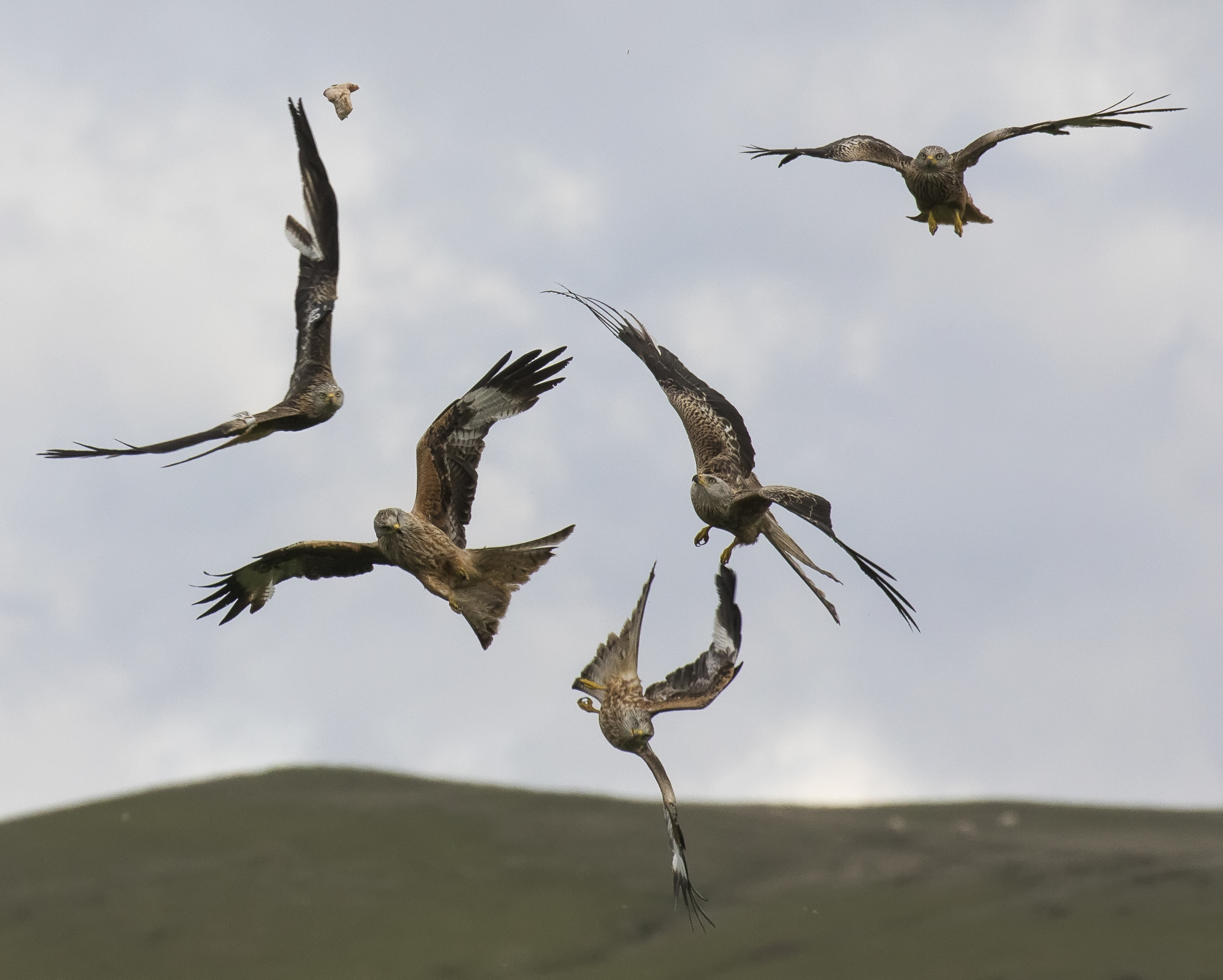 Redkites Flight Fight 28th May.jpg