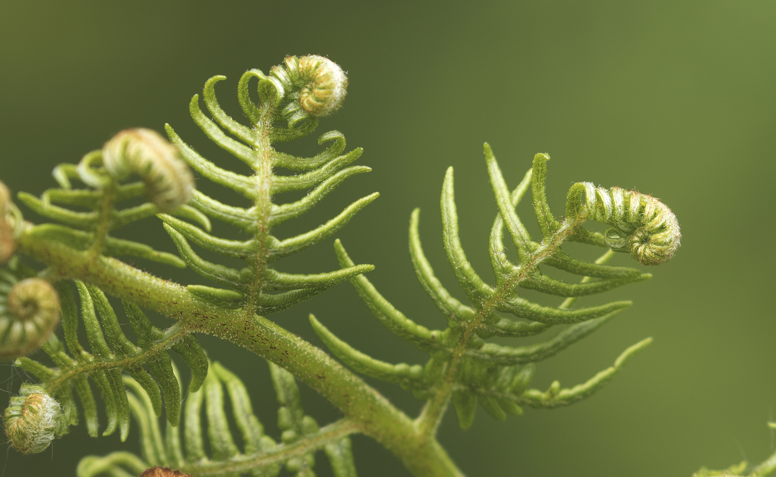 Fern Shapes 1 5th June.jpg